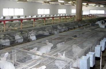 Кроличья ферма: бизнес план фермы с расчетами в московской области и как ее сделать своими руками, чертежи для этого и отзывы владельцев