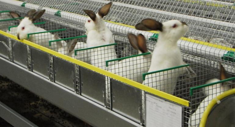 Бизнес планы для кроликов бизнес план продаж дверей
