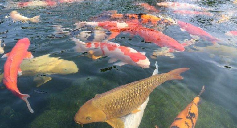 Рыба бизнес плана бизнес идея строительство коттеджа