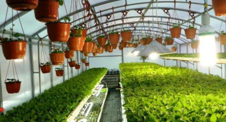 бизнес идея садового магазина