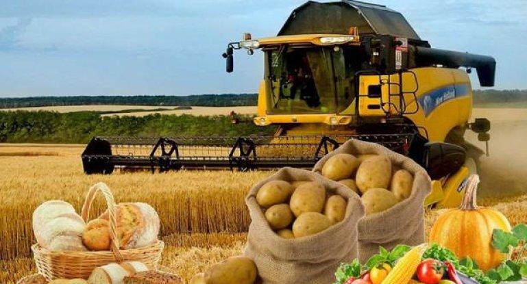 Бизнес план индейка фермерское хозяйство бизнес идеи скандинавии
