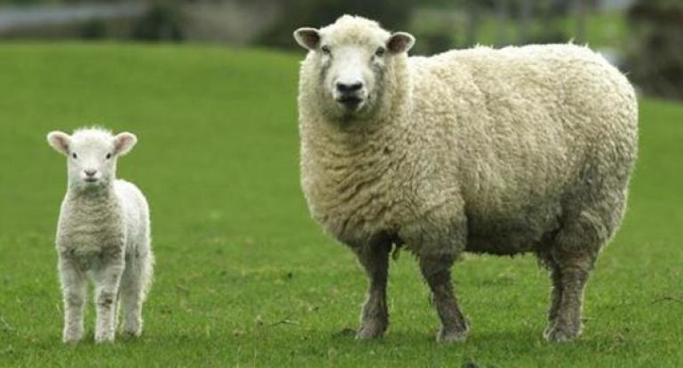 Содержание овец бизнес план бизнес идея японии