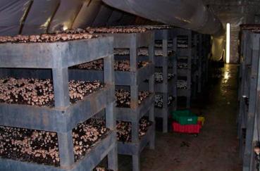 Бизнес план грибной фермы шампиньоны