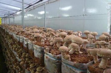 Заработок на грибах