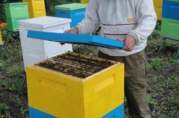 Пчеловодство выгодно ли заниматься